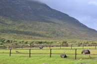 GOURITZ: Cattle country with newly built homestead at  for 4500000